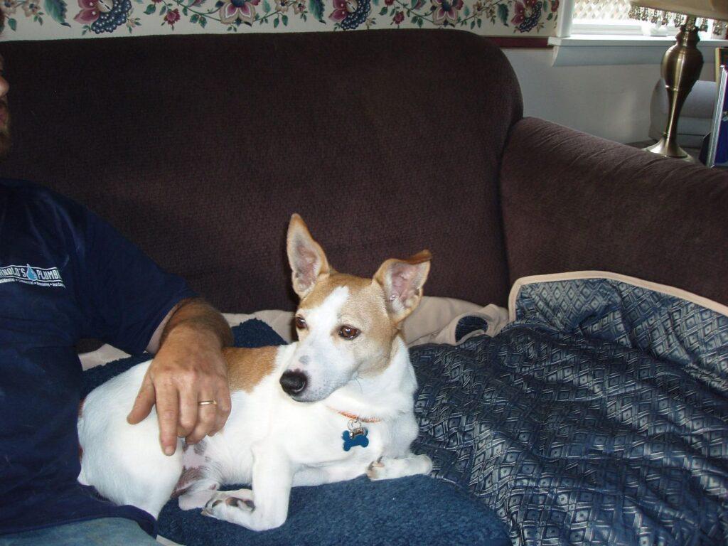 Donna Ryan Pamper Me Pets (14)